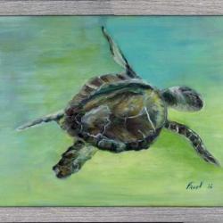 2016 Sea Turtle