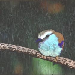Little bird 29 w x 23 h.jpg