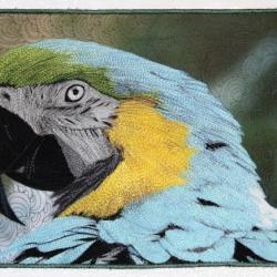 Parrot 20 x 10.jpg